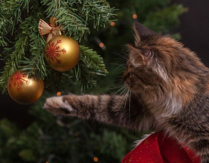 Decorazioni di Natale alternative – Il LibrAlbero